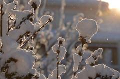 Nieve en jardn (pauli.lazo) Tags: trees naturaleza snow rboles beatifulcapture naturalezacautivadora