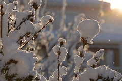 Nieve en jardín (pauli.lazo) Tags: trees naturaleza snow árboles beatifulcapture naturalezacautivadora