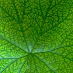 Paths (carlos_ar2000) Tags: naturaleza plant verde green planta hoja nature argentina leaf buenosaires camino path via pompeya