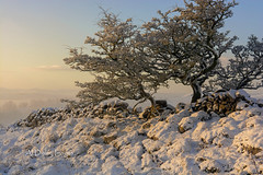 Winters warmer (alundisleyimages@gmail.com) Tags: trees winter mist snow nature weather wales sunrise landscape outdoors northwales openspaces