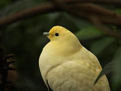 100_2596 (samuel_wkip) Tags: hongkong kodak admiralty hongkongpark hongkongparkaviary kodakz990 z990 hongkongpark香港公園 hongkongparkaviary香港公園觀鳥園
