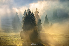 fog on hot sunrise in mountains-151004- (M. Pellinni) Tags: park wood morning travel autumn mist mountain plant color tree green nature beautiful weather yellow fog mystery pine forest sunrise season landscape dawn early haze colorful ray natural outdoor dusk good country hill meadow dramatic calm fresh ridge valley fir environment awake majestic idyllic tranquil dropbox conifer ifttt