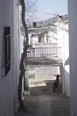 Entre el cielo y el suelo. (elojeador) Tags: ventana reja casa calle moto antena parra tronco fachada balcn chimenea piedra alcantarilla lasalpujarras tinao bubin adoqun elojeador contendenciaaquedarmecalvo