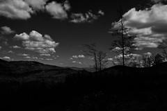 Dark side of the forrest (Pztryk) Tags: las trees dark forrest gry hala chmury drzewa beskid jaworowa biae czarno ponure kotarz