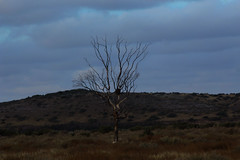 IMG_7167 (claurudoOK) Tags: tree nature minimalism wildnature