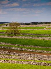 White Peak Fields (Peter Quinn1) Tags: derbyshire peakdistrict limestone drystonewalls whitepeak litton