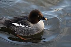 IMG_9746 (u.wittwer) Tags: park zoo schweiz switzerland tiere suisse tierpark heimat arth naturpark goldau widi