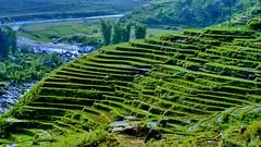 Sapa 0068 (gerard eder) Tags: world travel landscape asia rice north vietnam southeast northern landschaft ricefields sapa riceterraces reise