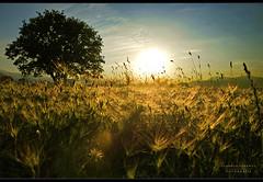 - E X T R E M E - (swaily  Claudio Parente) Tags: sunset nikon tramonto luce grano nikond300 swaily