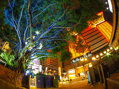 (andy818102) Tags: building tree night taiwan fisheye tainan