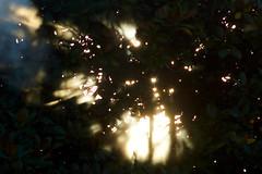 Smoky tree (Bryan Gellatly) Tags: southauckland