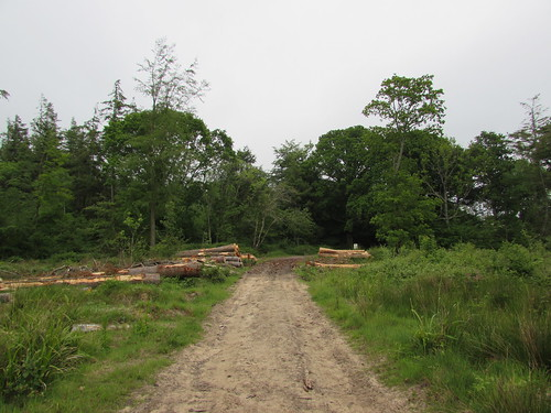 Coombe Keynes: Haremere Wood (Dorset)