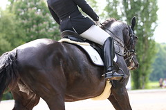 IMG_1890 (dreiwn) Tags: horse pony horseshow pferde pferd equestrian horseback reiten horseriding showjumping dressage reitturnier dressur reitsport dressyr ilsfeld dressuur ridingclub junioren ridingarena pferdesport springreiten reitplatz reitverein dressurreiten dressurpferd dressurprüfung tamronsp70200f28divcusd jugentturnier