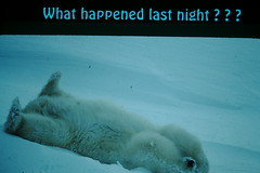 Title Slide- What Happened Last Night (foundslides) Tags: irmalouiserudd johnhrudd foundslides slidefilm kodachrome kodak sldes slides vintage retro colour color transparencies 1980s alaska travellers travellin travel naturephotography outdoor landscape analog slidecollection irmarudd