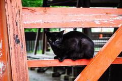Today's Cat@2016-06-28 (masatsu) Tags: cat pentax catspotting mx1 thebiggestgroupwithonlycats