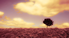 Amethyst Skies (kpanderson878) Tags: amethyst yellow strawberry magical landscape onetree tree mauve clouds