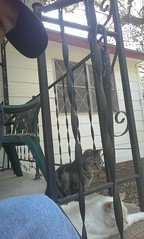 Day 342 (knowledgeguru_37) Tags: shadow me frontporch clarence