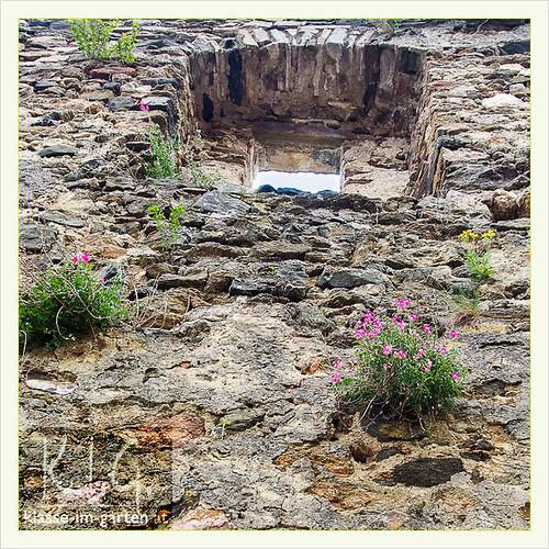 Schallaburg gaerten: alte mauern | 2014-07