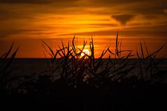 Summer time is sunset time (Olof Virdhall) Tags: sun sunset sunshine ocean resund skanr canon eos5 mkiii grass