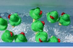 Duck Race-7