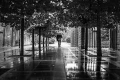 Walking in the Rain (Neo7Geo) Tags: rain glasgow wet sonya7mkii sony reflections scotland umbrella weather ricorodriguez neo7geo uk