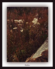 Rain (Lightning StØrm) Tags: tobestill pinnaclephotography tistheseason trolled daarklands digitalartpro legacy rockpaper