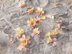 Sunken Dreams (Steve Taylor (Photography)) Tags: vase daffodil flower glass liquefaction footprints sand yellow pink petals earthquake broken damage smashed quake