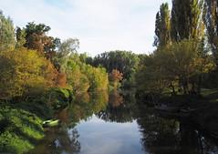 Schwechatbach mit Daubelfischer (Sam.24) Tags: schwechat bach nationalpark donauauen wasser fluss herbst golden niederösterreich austria