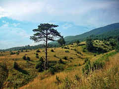 Lonely (R_Ivanova) Tags: nature landscape autumn fall field tree hill sky cloud clouds colors color sony rivanova bulgaria       mountainside ruby3