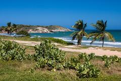 El Tirano (_EZE_) Tags: sea sun mer sol southamerica island mar meer venezuela playa insel margarita caribbean isla ilha caribe karibik suramérica américadelsur südamerika nuevaesparta