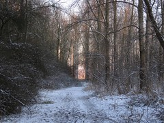Snowfun (Manon van der Burg) Tags: winter white snow forest sneeuw pad wonderland bos
