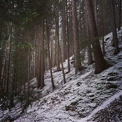 Silenzi nel bosco (luigicalori) Tags: wood trees mountain snow alps square tirol sony silence squareformat mayfair alto alpi luigi sud adige alpha7 iphoneography instagramapp