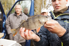 BvdW-20141112-101918.jpg (bennyvandewerfhorst) Tags: people fish nature kids fishing kinderen natuur carp population roach bream vissen kampen mensen karpfen karper voorn brasem hengelsport populatie hengelsportvereniging afvissing onsvermaak