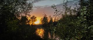 Un soir dans les marais