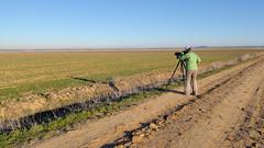 Laguna de Boada (Acrocephalus Photography) Tags: travel travelling spain birding birdwatching palencia tierradecampos boadadecampos lagunadeboada