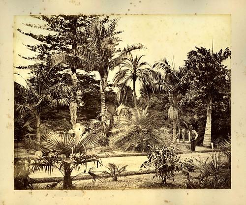 history gardens palms gardening sydney