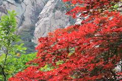 2014 Oct North Korea trip DPRK  (1871) (Lawrence Wang ) Tags: trip korea korean northkorea nk pyongyang dprk  northkorean