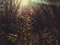 Hidden World (Eveiebear ) Tags: cameraphone brown sunlight cold green forest woods backyard foliage sunray sunflare iphone 2014 warmtones chillyday hiddenworld iphonephoto iphoneography iphoneonly whimsicalworld