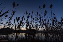 Day 302 - Daybreak (Trespassion) Tags: sunrise canon eos ef 6d 1635 f28l canon6d trespassion365
