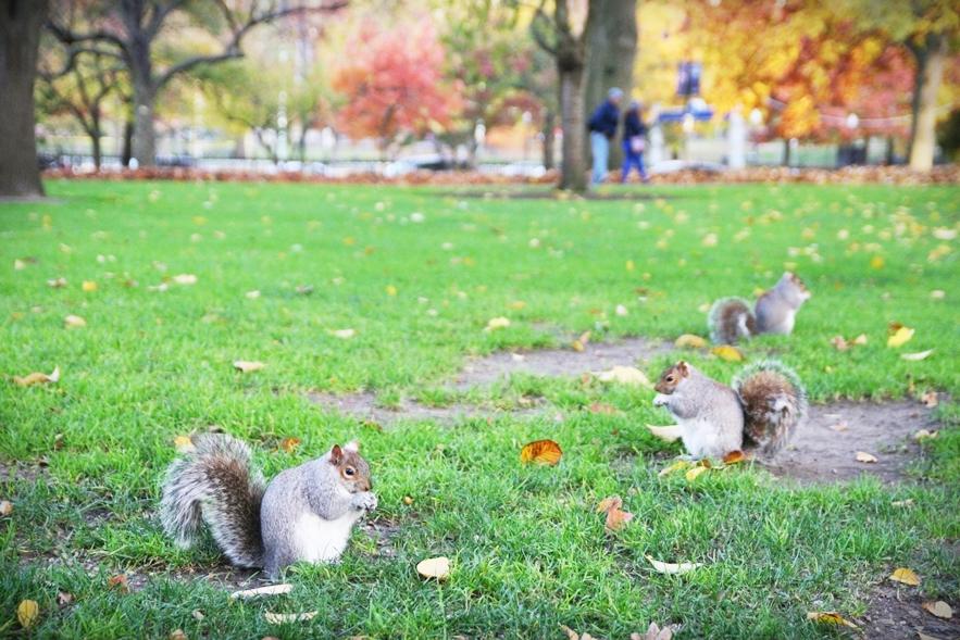 boston-common-public-garden-autumn-10