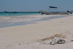 Cada Libre (Sergio Tohtli) Tags: bird beach mar playa aves ave gaviota impactoambiental impunidad tulm environmentalimpact inconciencia mosaiconaturamxico