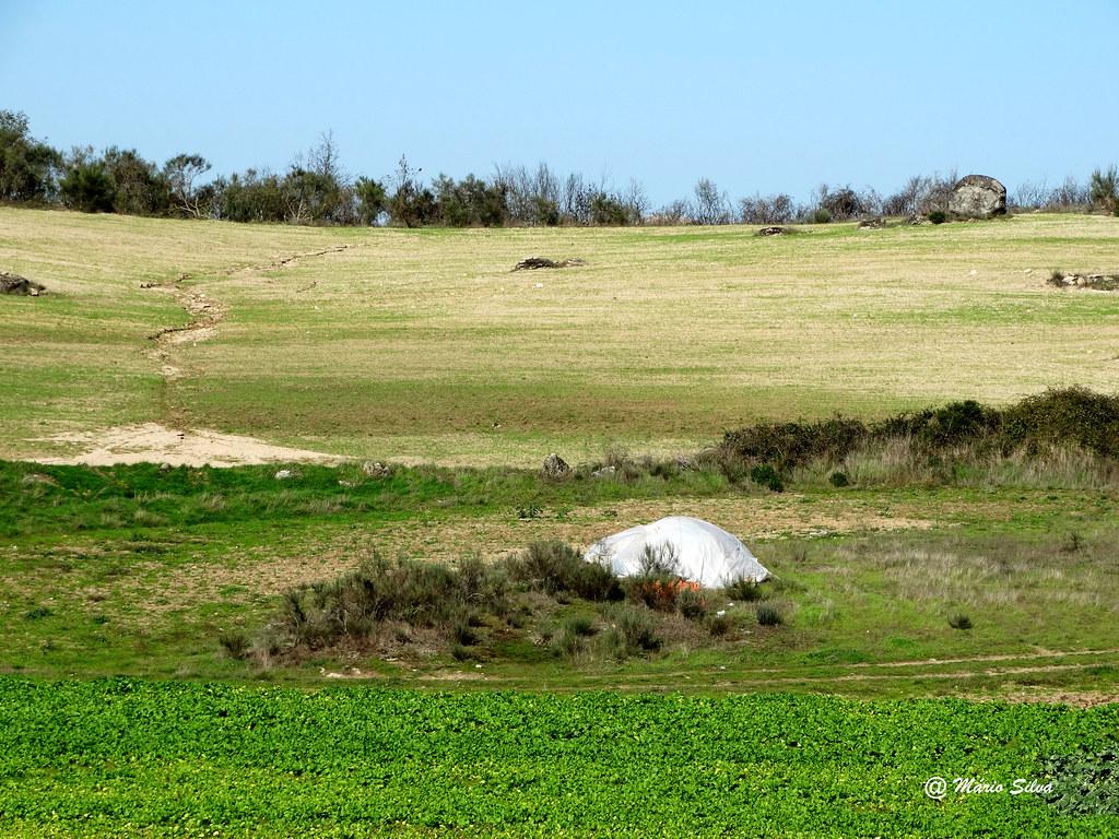 Águas Frias (Chaves) - ... mesmo em pleno outono ... o verde teima em persistir ...