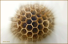 "Uma ""casinha"" perfeita (antoninodias13) Tags: arquitetura ninho samsung veneno vespas picadas perfeição larvas sertã platinumheartaward antoninodias portugalsertã"