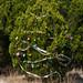 Trees_of_Loop_360_2014_079