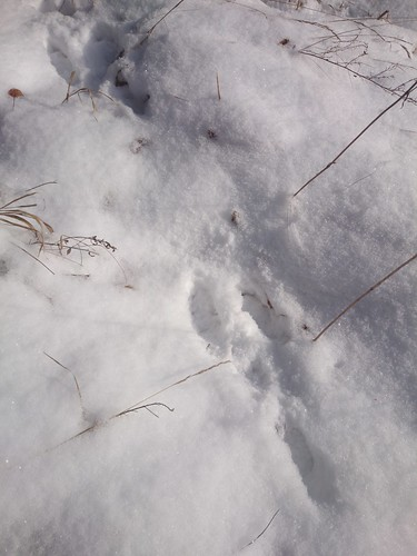 rabbit prints