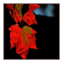 GHOSTS OF AUTUMNS PASSED (Walter A. Aue) Tags: autumn canada leaves novascotia trail herbstblaetter walteraaue