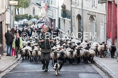 IMG_8153 (abphot) Tags: horizon past loire moutons nevers brebis transhumance troupeau abphot atbelkacem neversnievre