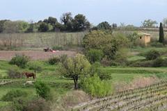 au printemps (obmm) Tags: france canon spring powershot paca provence printemps dpp vaucluse g12 mormoiron comtatvenaissin