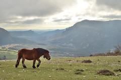 Aske (Erre Taele) Tags: park parque horse natural country basque navarre parke navarra euskal herria nafarroa urbasa naturala