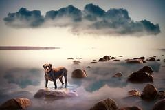 Mias world, Mattapoisett, Cape Cod (ShanePix) Tags: light dog sun seascape beach water clouds landscape rocks mattapoisett platinumheartaward